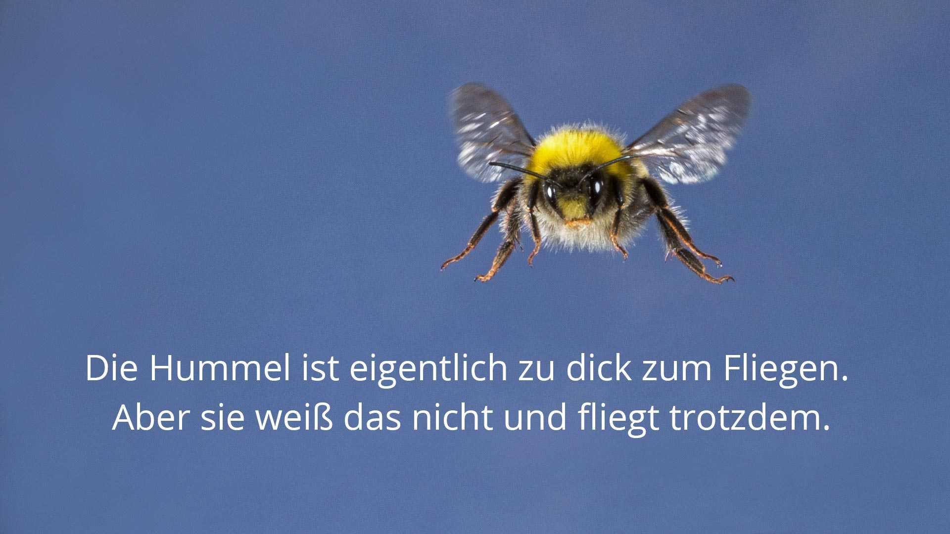 Das Hummel-Paradoxon besagt, dass Hummeln nach Gesetzen der Aerodynamik eigentlich nicht fliegen können dürften. Das stimmt aber nicht.