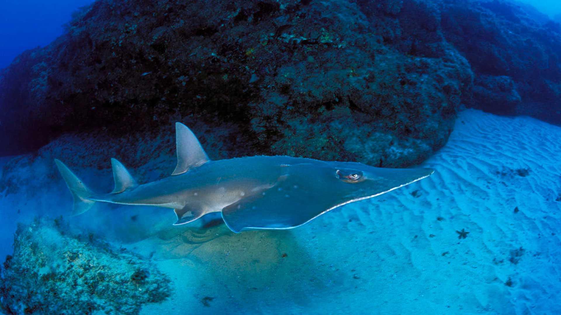 Haie: Ein Imagewandel war dringend nötig, um die gefährdeten Fische besser schützen zu können