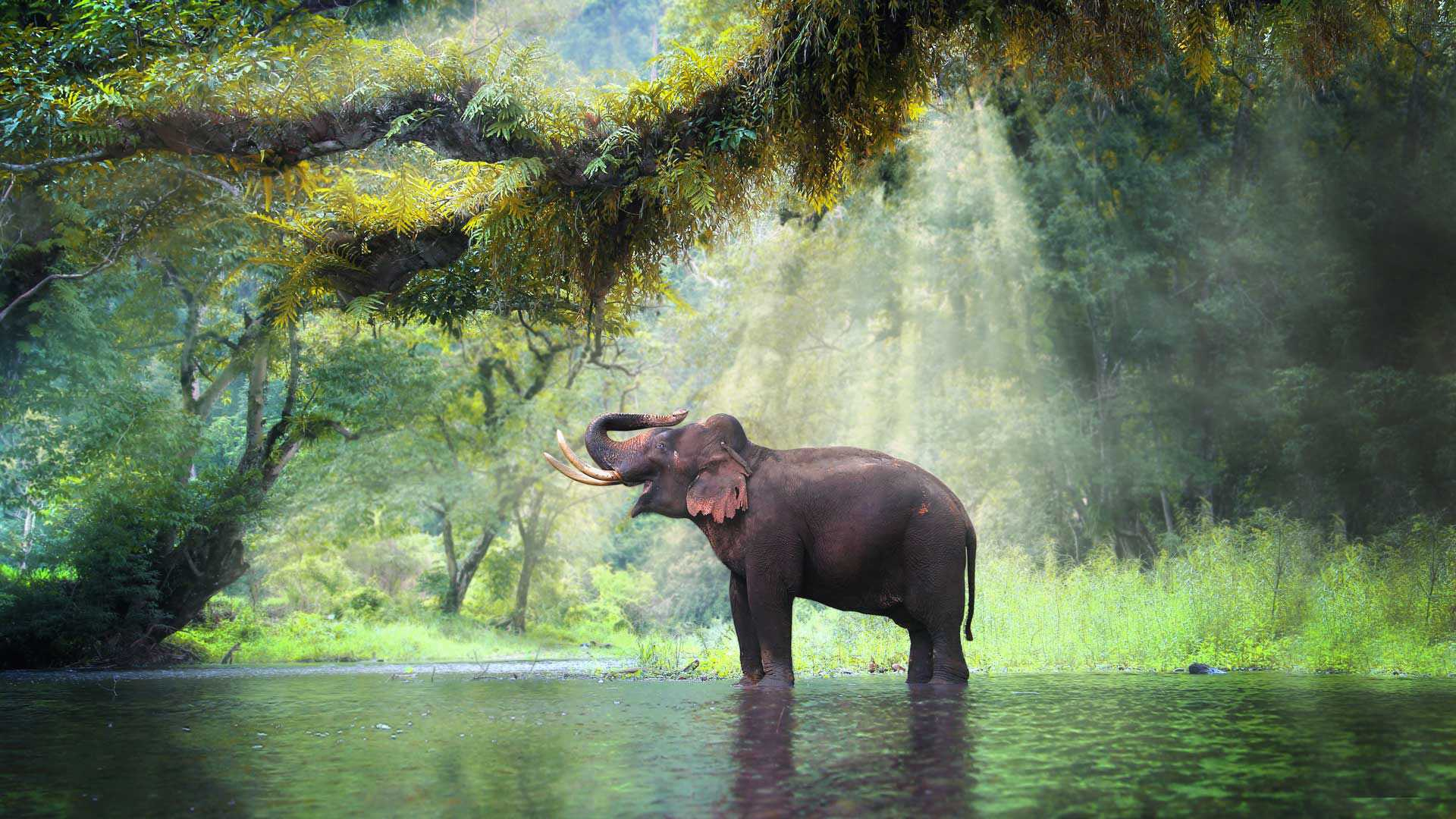 Welche Arten von Elefanten gibt es?