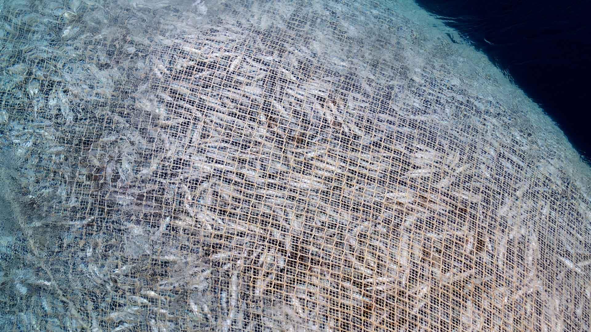 Fischereisubventionen Fischfang