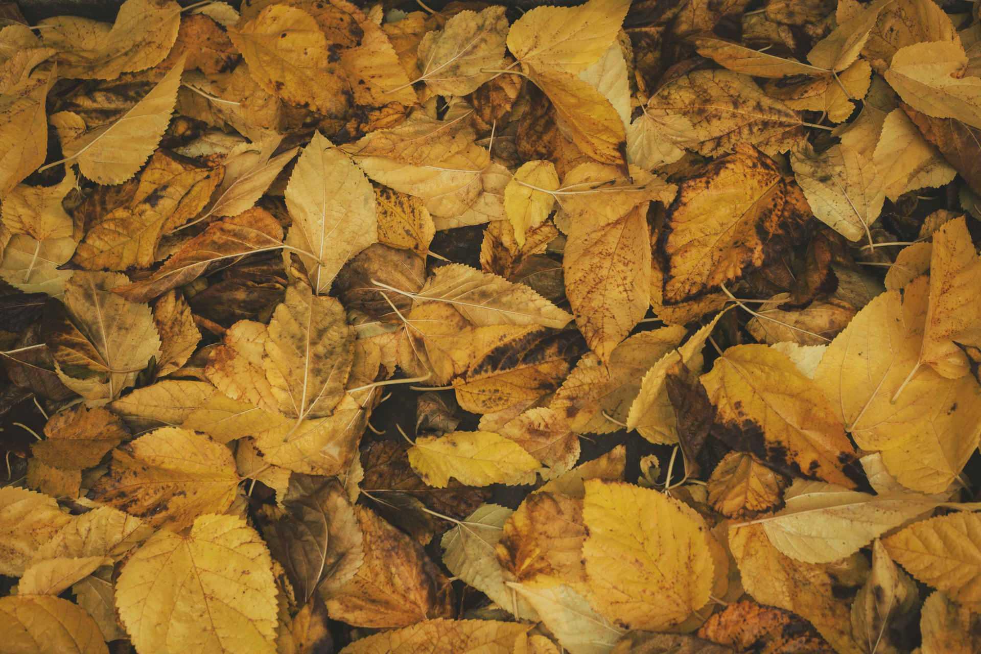 Im Herbst Laub bedeckter Boden